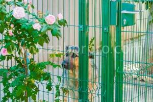 Вольер для собаки-01